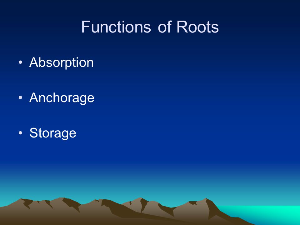 Functions of Roots Absorption Anchorage Storage