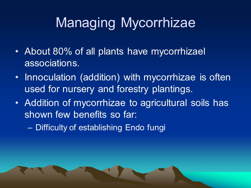 Managing Mycorrhizae About 80% of all plants have mycorrhizael associations.