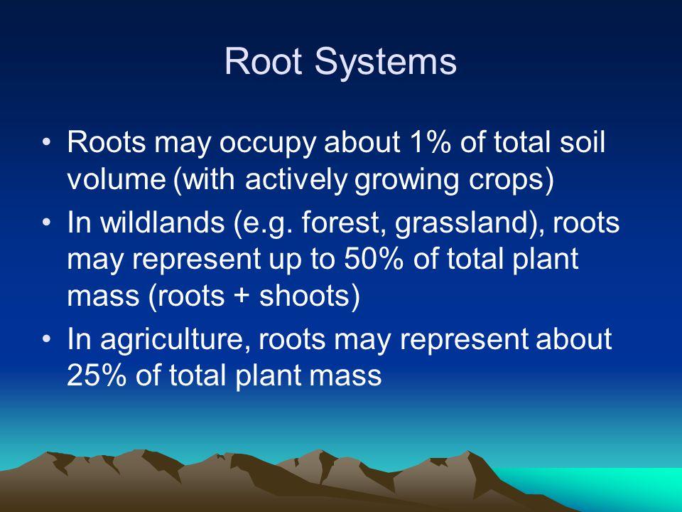 Depth of Root Systems Lettuce30 cm Cotton120-150 cm Alfalfa250-300 cm Turf60-90 cm Mesquite50 m ????.