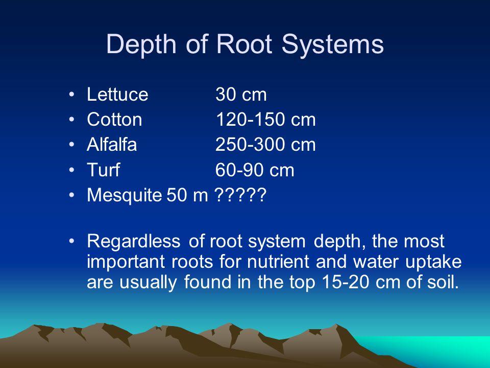 Root Morphology Longitudinal –Meristematic zone –Elongation zone –Maturation zone –Mature zone Cross-sectional –Epidermis –Cortex –Endodermis –Stele