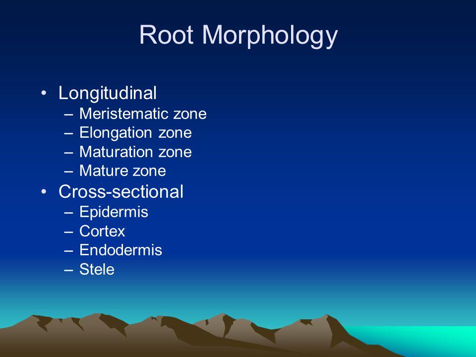Root Morphology { Meristematic Zone { Elongation Zone { Maturation Zone Mature Zone Cross-section of maturation zone