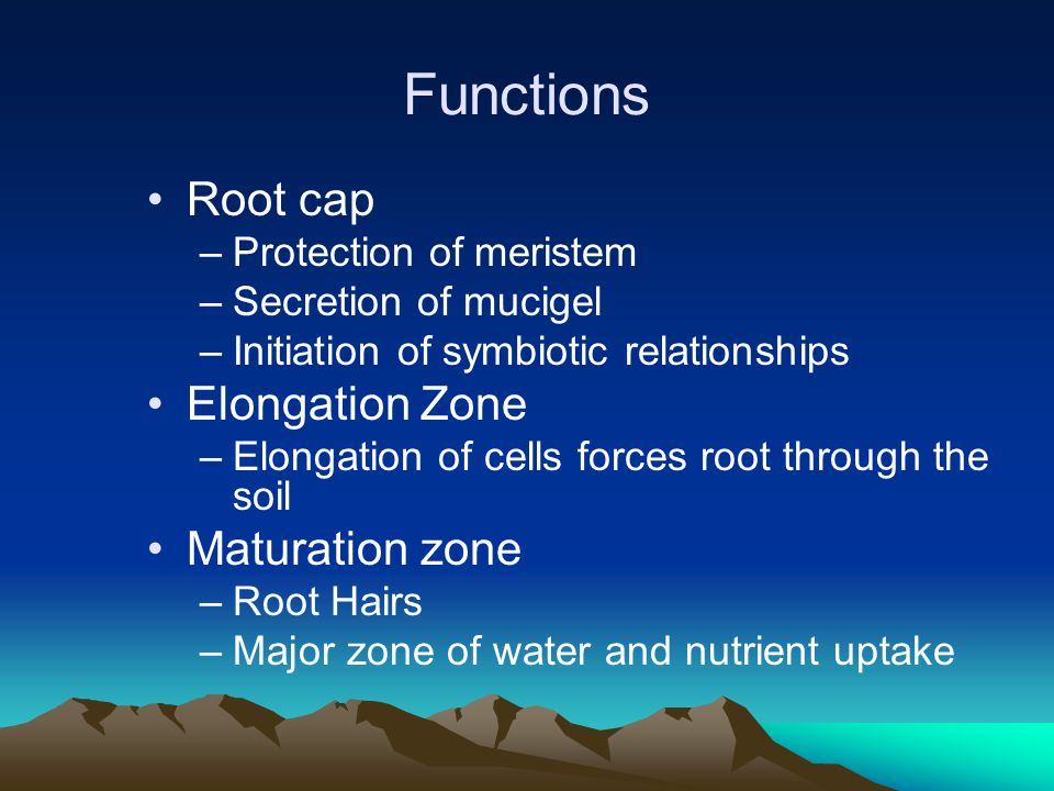 Organic C in the Rhizosphere (Rhizodeposition) Plants release simple and complex carbohydrates, nucleic acids, enzymes into the rhizosphere These compounds are used by microorganisms as sources of C and energy.