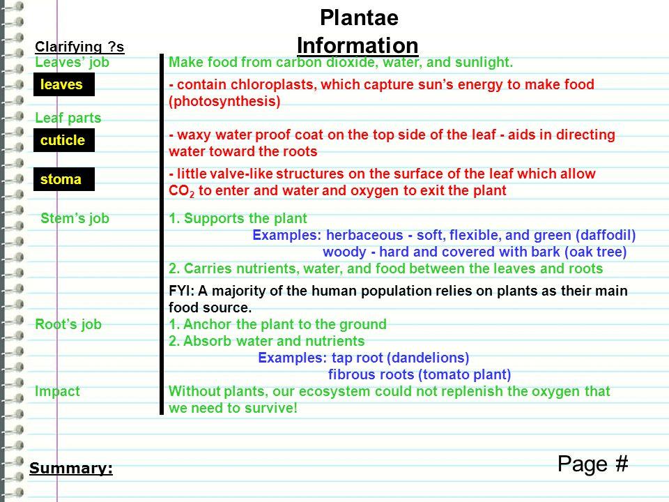 Clarifying ?s Information Plantae Page # characteristics 1.