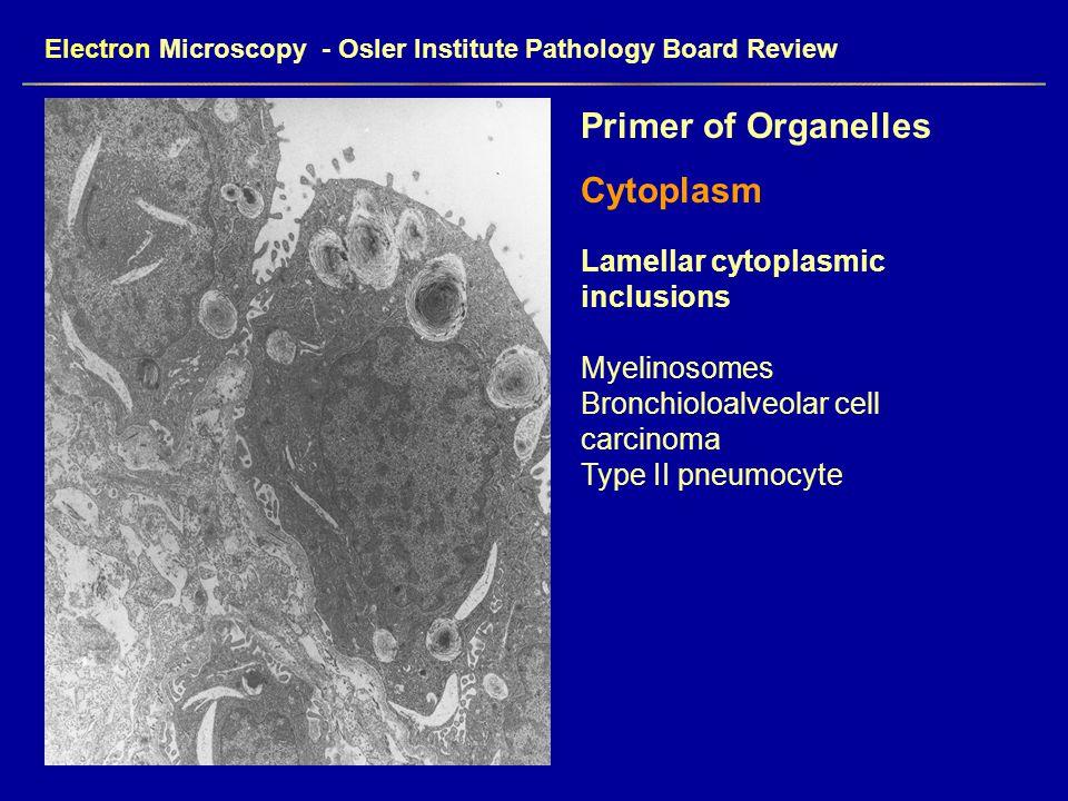 Electron Microscopy - Osler Institute Pathology Board Review Primer of Organelles Cytoplasm Lamellar cytoplasmic inclusions Myelinosomes Bronchioloalv