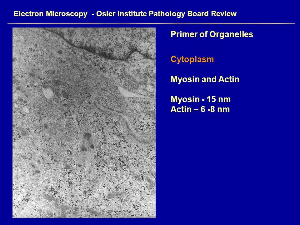 Electron Microscopy - Osler Institute Pathology Board Review Primer of Organelles Cytoplasm Myosin and Actin Myosin - 15 nm Actin – 6 -8 nm