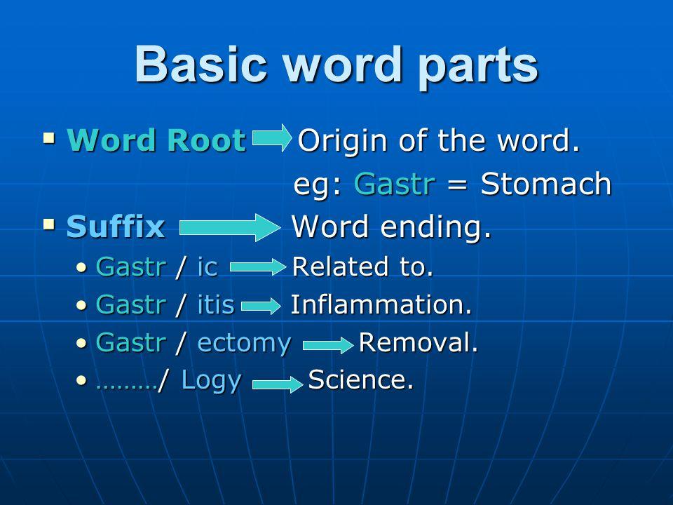 Basic word parts …continued Prefix Word beginning.