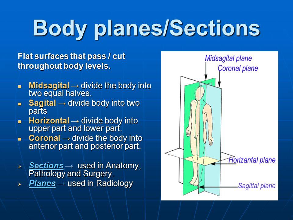 Body Cavities Dorsal, consist of Dorsal, consist of Cranial cavity, contains brain etc.Cranial cavity, contains brain etc.