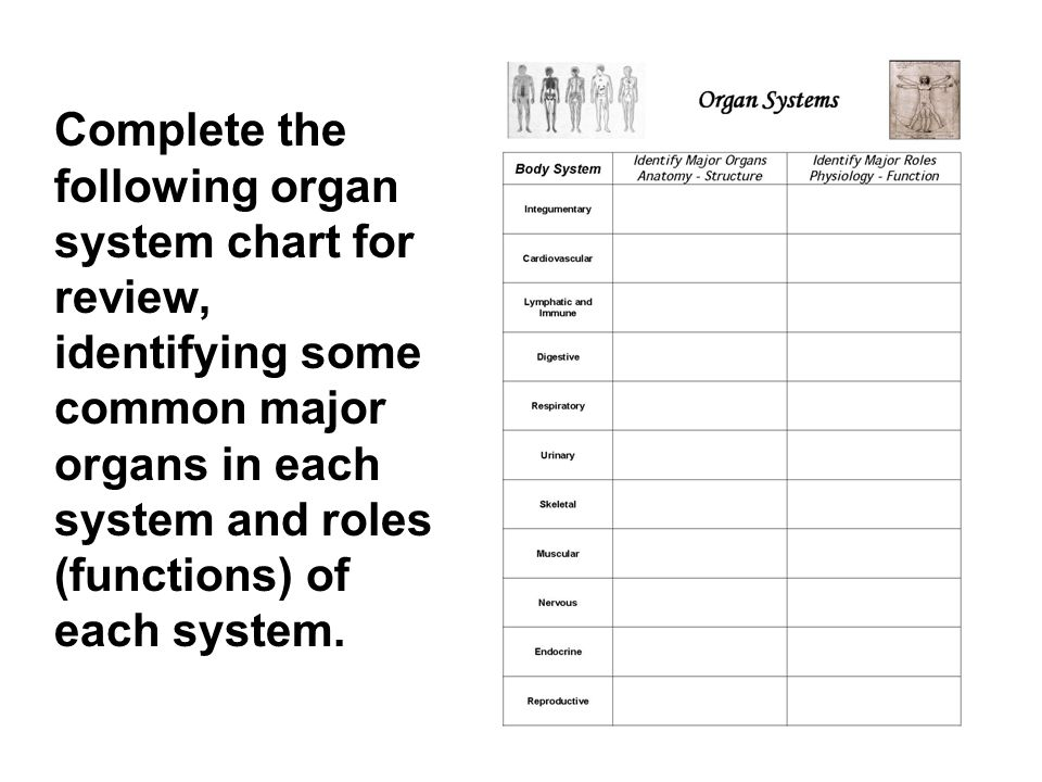 Complete the following organ system chart for review, identifying some common major organs in each system and roles (functions) of each system.