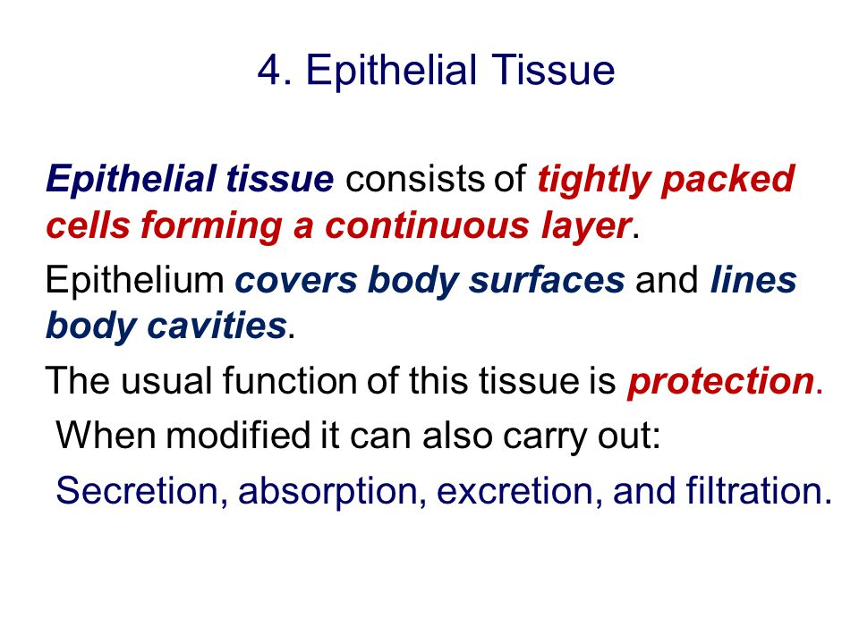 4. Epithelial Tissue Epithelial tissue consists of tightly packed cells forming a continuous layer. Epithelium covers body surfaces and lines body cav