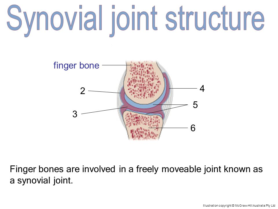 1 5 4 3 2 6 Illustration copyright © McGraw-Hill Australia Pty Ltd This capsule protects the synovial membrane.