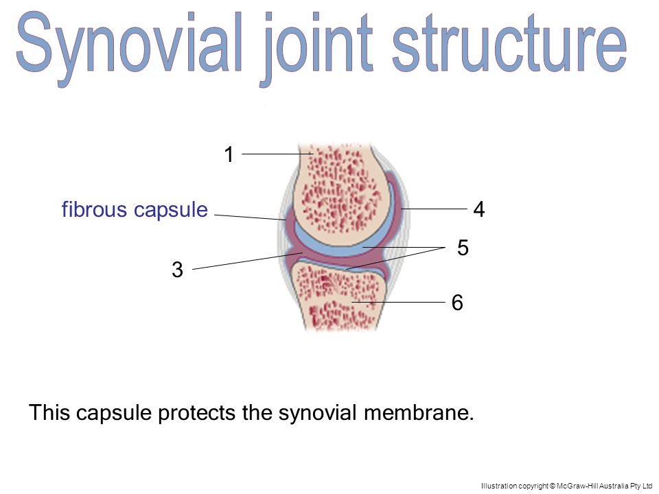 1 5 4 3 2 6 Illustration copyright © McGraw-Hill Australia Pty Ltd The fluid is found in the joint cavity.