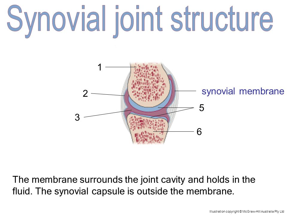 1 5 4 3 2 6 Illustration copyright © McGraw-Hill Australia Pty Ltd The membrane surrounds the joint cavity and holds in the fluid.