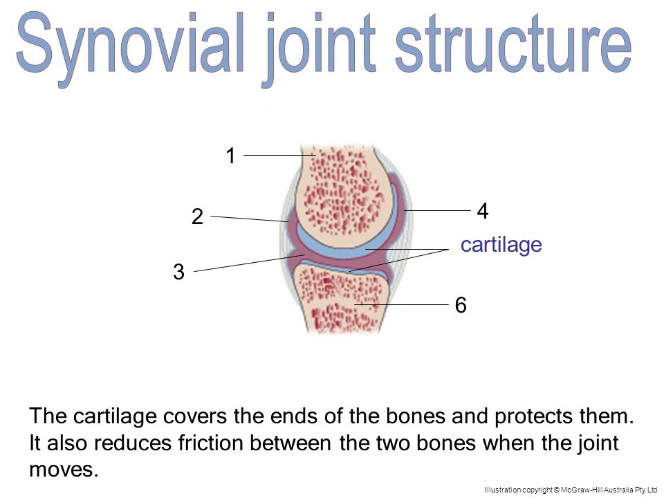 1 5 4 3 2 6 Illustration copyright © McGraw-Hill Australia Pty Ltd finger bone Finger bones are involved in a freely moveable joint known as a synovial joint.