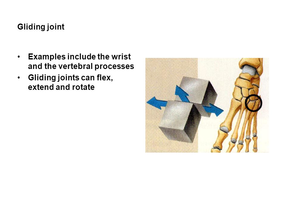 Gliding joint Examples include the wrist and the vertebral processes Gliding joints can flex, extend and rotate
