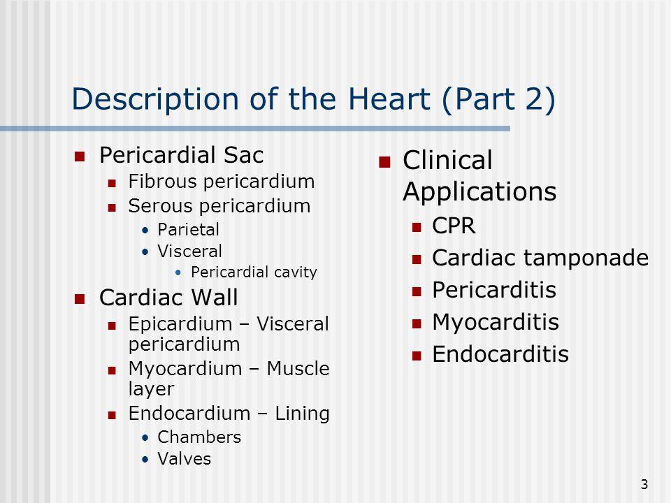 4 Gross Anatomy of the Heart (Anterior Aspect)