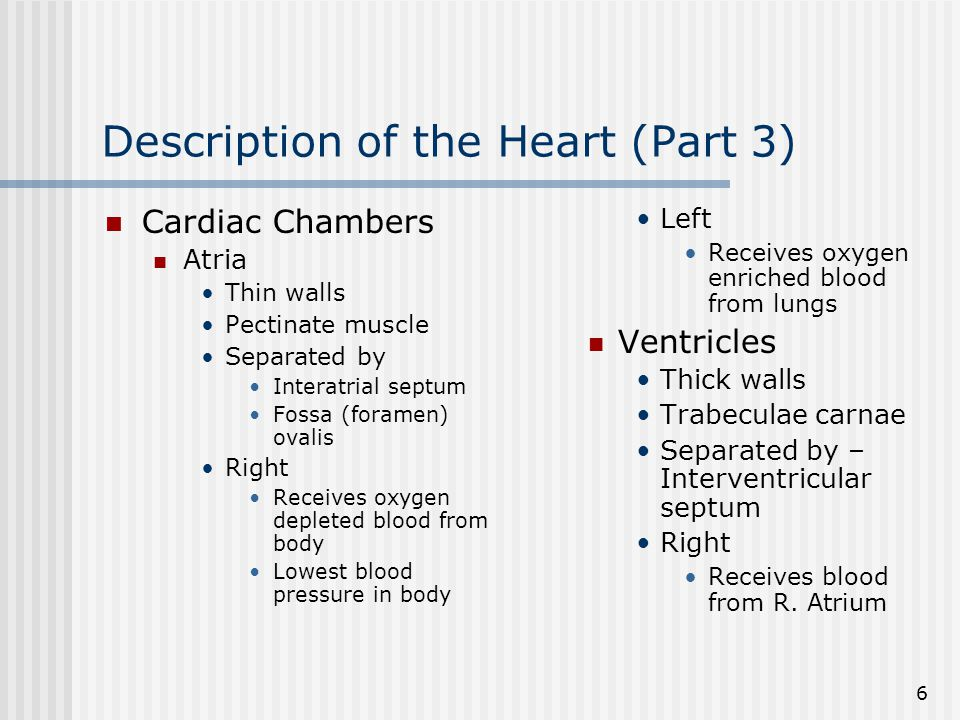 7 Description of the Heart (Part 4) Pumps blood to lungs Left Receives blood from L.
