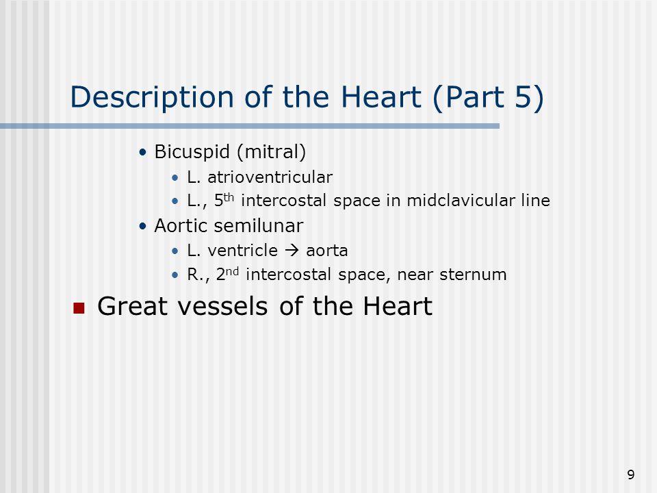 10 Description of the Heart (Part 6) Inferior vena cava (IVC) Coronary sinus Superior vena cava (SVC) Pulmonary trunk – Right ventricle Pulmonary veins – Left atrium Aorta – Left ventricle