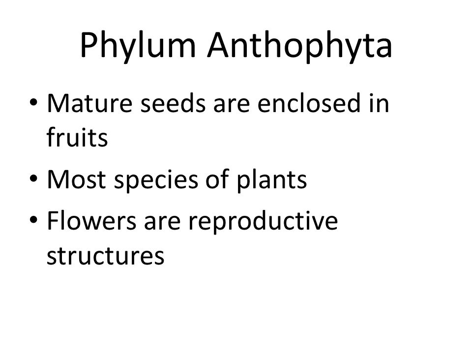 Phylum Anthophyta Mature seeds are enclosed in fruits Most species of plants Flowers are reproductive structures
