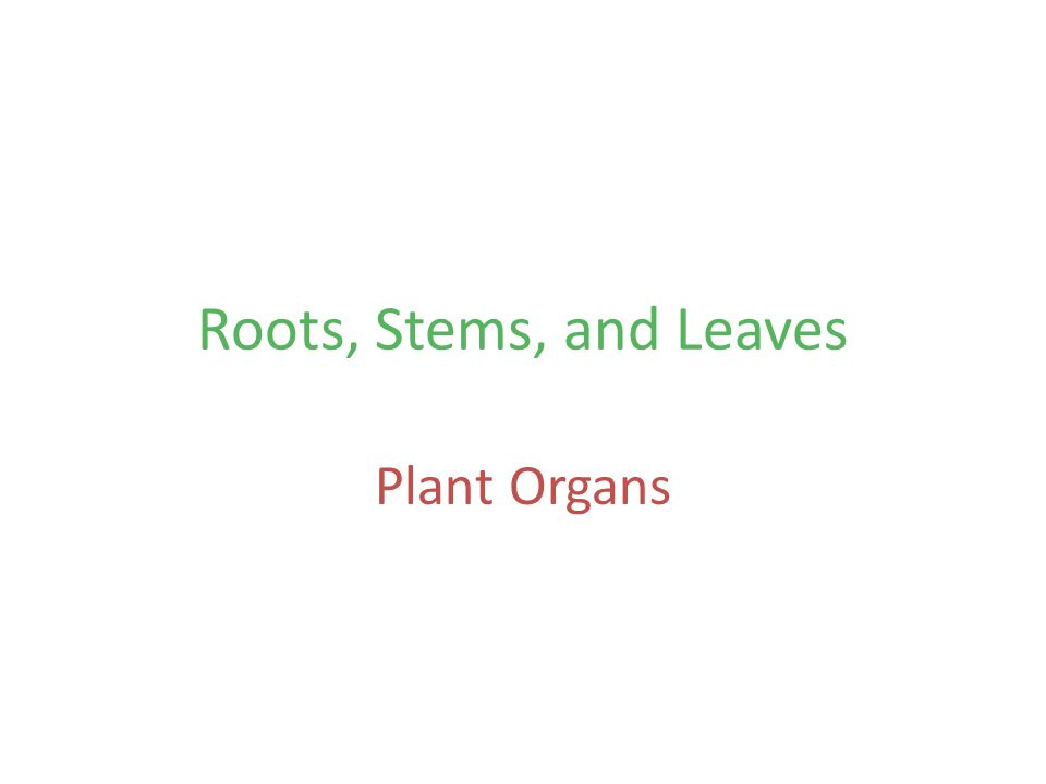 Roots, Stems, and Leaves Plant Organs