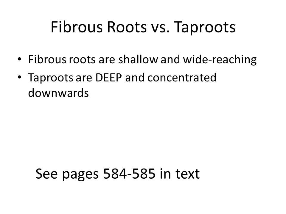 Fibrous Roots vs. Taproots Fibrous roots are shallow and wide-reaching Taproots are DEEP and concentrated downwards See pages 584-585 in text