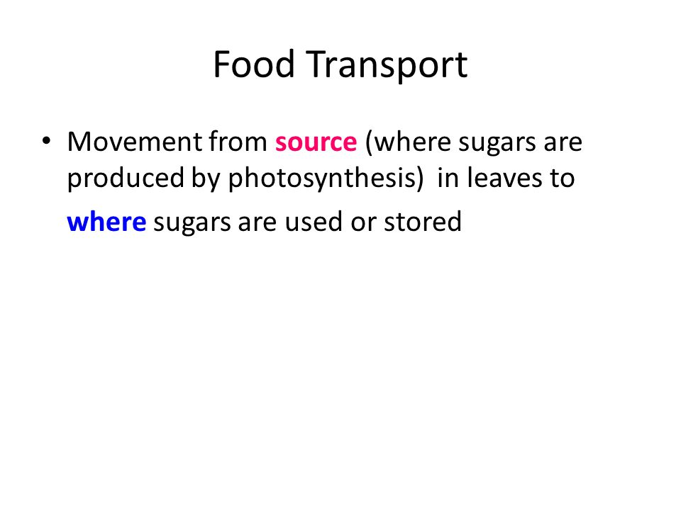 Food Transport Movement from source (where sugars are produced by photosynthesis) in leaves to where sugars are used or stored
