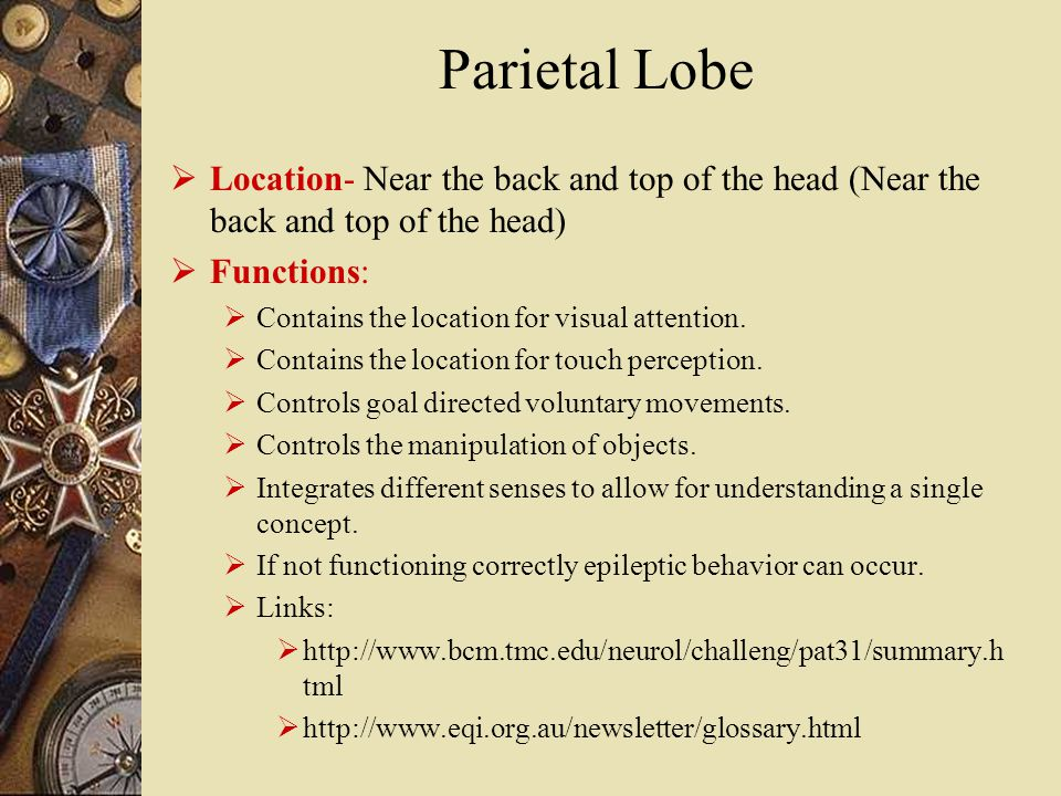 Parietal Lobe  Location- Near the back and top of the head (Near the back and top of the head)  Functions:  Contains the location for visual attention.
