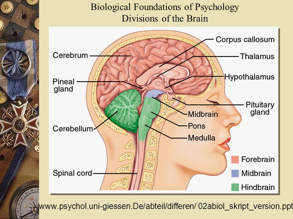 Biological Foundations of Psychology Divisions of the Brain www.psychol.uni-giessen.De/abteil/differen/ 02abiol_skript_version.ppt