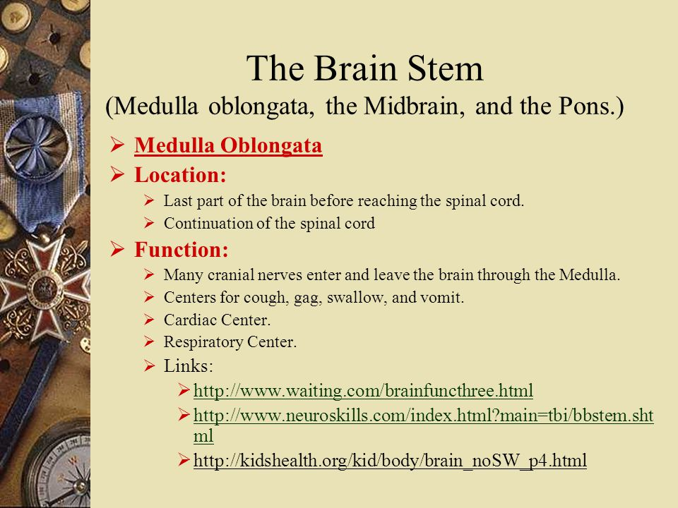 The Brain Stem (Medulla oblongata, the Midbrain, and the Pons.)  Medulla Oblongata  Location:  Last part of the brain before reaching the spinal cord.