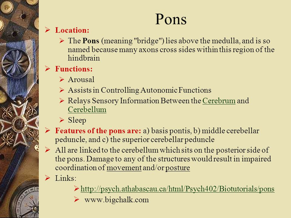 Pons  Location:  The Pons (meaning bridge ) lies above the medulla, and is so named because many axons cross sides within this region of the hindbrain  Functions:  Arousal  Assists in Controlling Autonomic Functions  Relays Sensory Information Between the Cerebrum and CerebellumCerebrum Cerebellum  Sleep  Features of the pons are: a) basis pontis, b) middle cerebellar peduncle, and c) the superior cerebellar peduncle  All are linked to the cerebellum which sits on the posterior side of the pons.