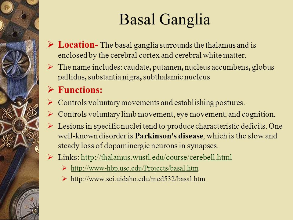 Basal Ganglia  Location- The basal ganglia surrounds the thalamus and is enclosed by the cerebral cortex and cerebral white matter.