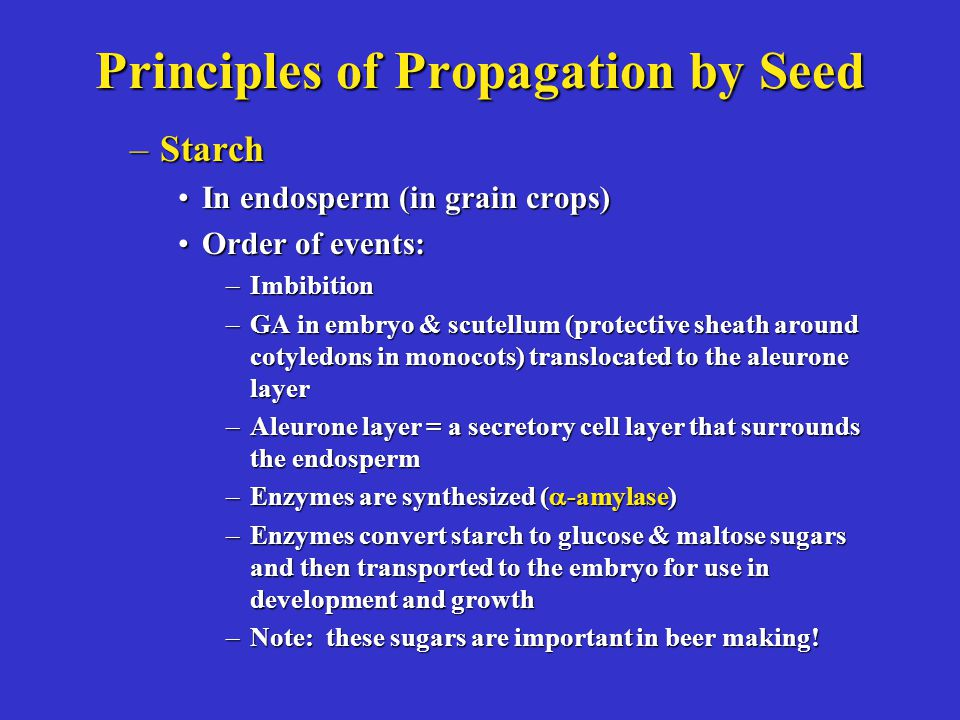 Principles of Propagation by Seed –Starch In endosperm (in grain crops)In endosperm (in grain crops) Order of events:Order of events: –Imbibition –GA