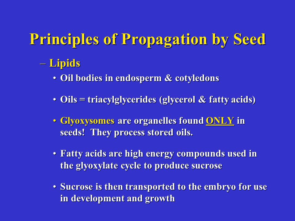 Principles of Propagation by Seed –Lipids Oil bodies in endosperm & cotyledonsOil bodies in endosperm & cotyledons Oils = triacylglycerides (glycerol