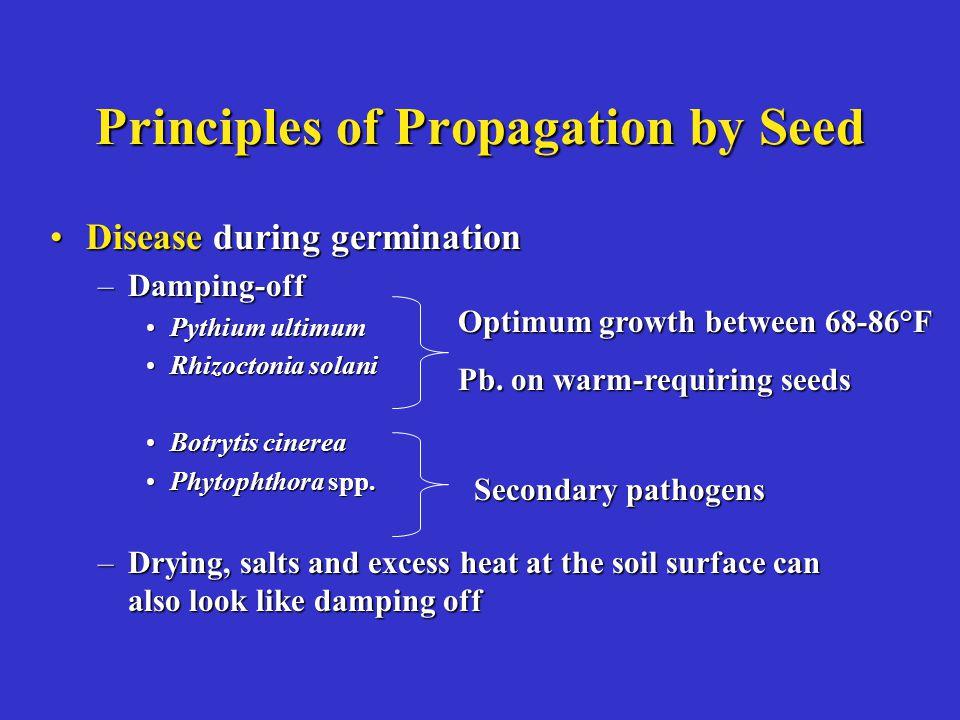 Principles of Propagation by Seed Disease during germinationDisease during germination –Damping-off Pythium ultimumPythium ultimum Rhizoctonia solaniR