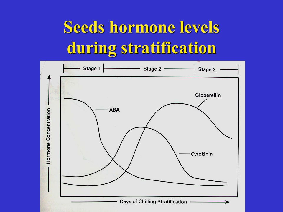 Seeds hormone levels during stratification