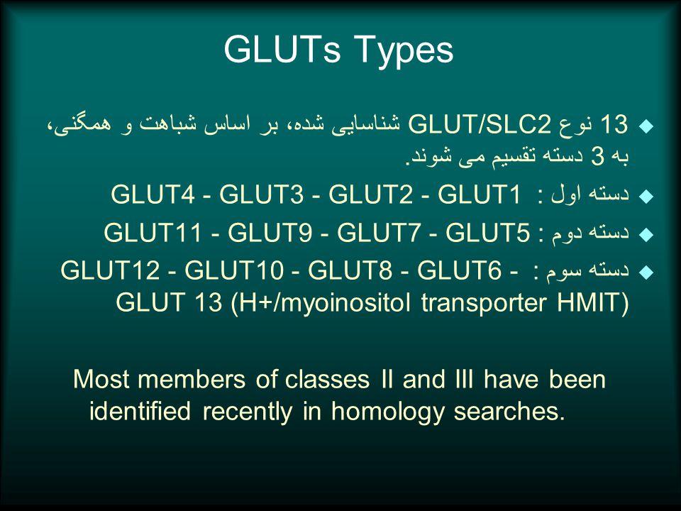 GLUTs Types u 13 نوع GLUT/SLC2 شناسایی شده، بر اساس شباهت و همگنی، به 3 دسته تقسیم می شوند.