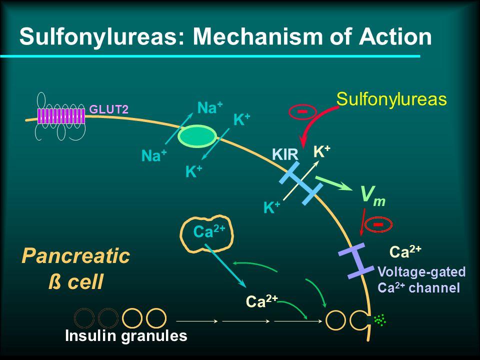 Na + K+K+ K+K+ K+K+ K+K+ GLUT2 Ca 2+ Voltage-gated Ca 2+ channel KIR Pancreatic ß cell Insulin granules Ca 2+ - Sulfonylureas - VmVm Sulfonylureas: Mechanism of Action
