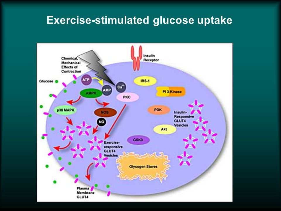 Exercise-stimulated glucose uptake