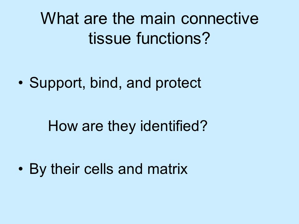 What are the main connective tissue functions. Support, bind, and protect How are they identified.