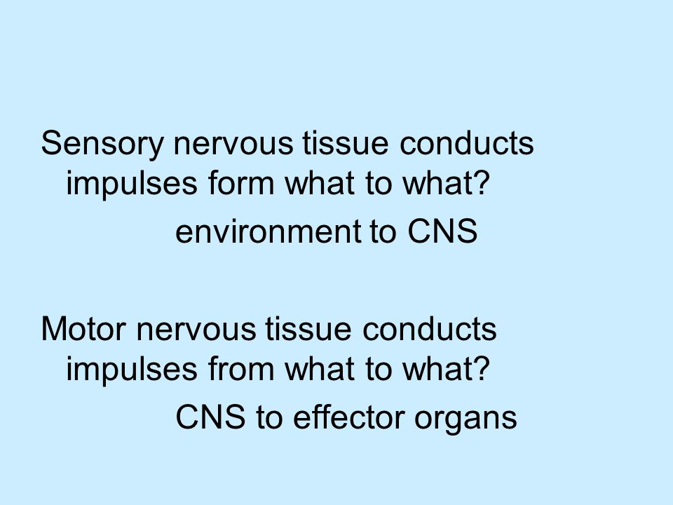 Sensory nervous tissue conducts impulses form what to what.