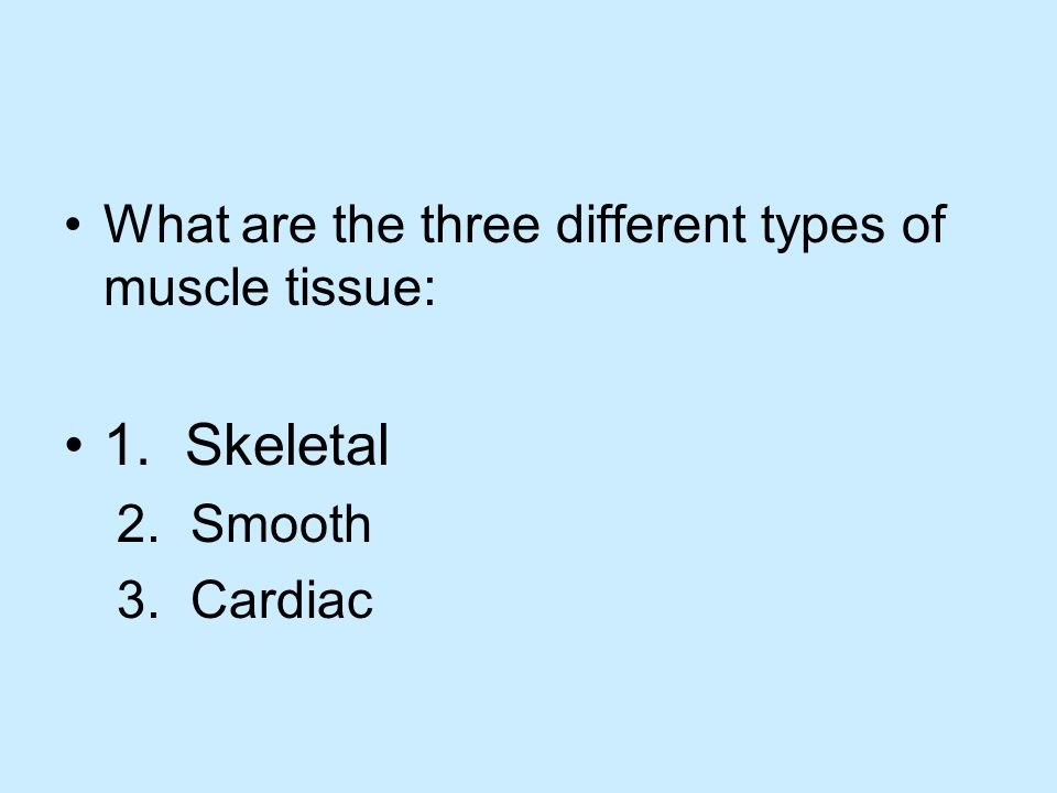 What are the three different types of muscle tissue: 1. Skeletal 2. Smooth 3. Cardiac