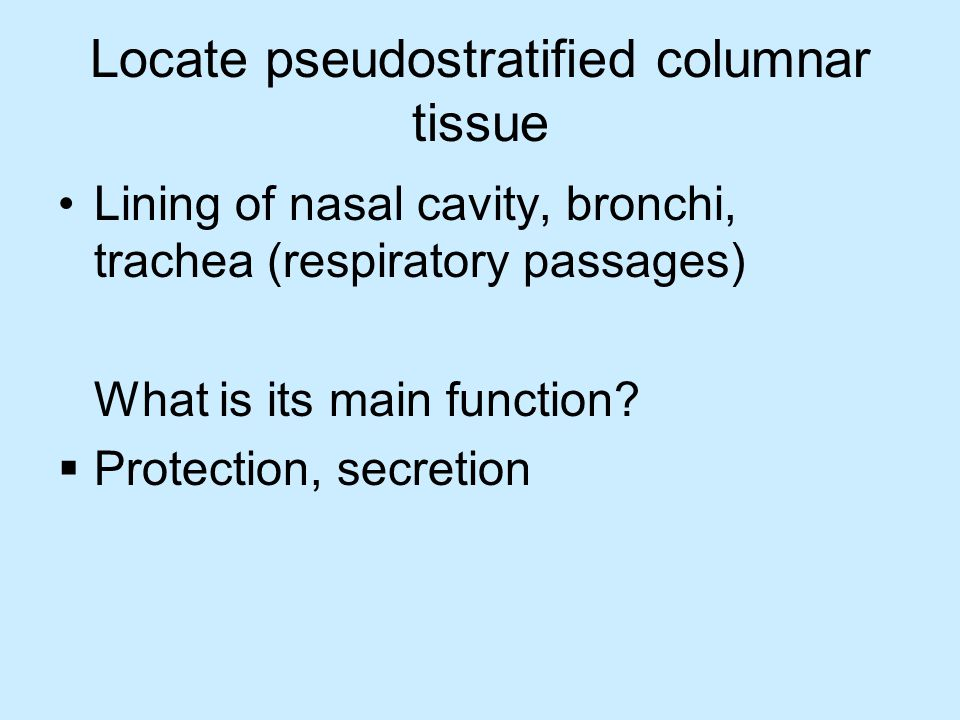 Locate pseudostratified columnar tissue Lining of nasal cavity, bronchi, trachea (respiratory passages) What is its main function.