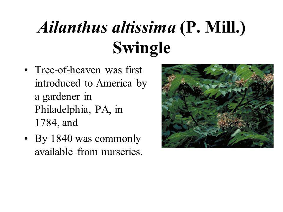 Ailanthus altissima (P.