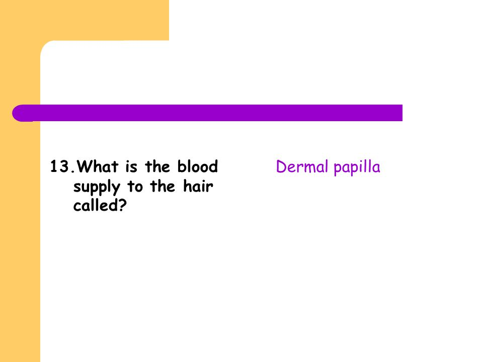 13.What is the blood supply to the hair called? Dermal papilla