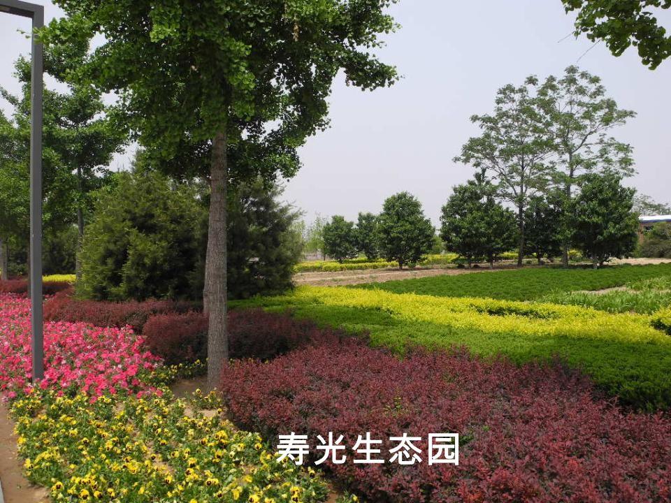 寿光生态园