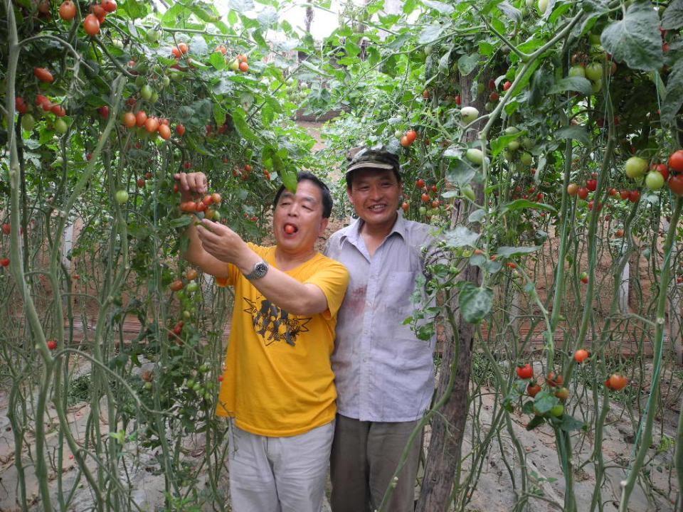 我家乡外甥民丰种的西红柿