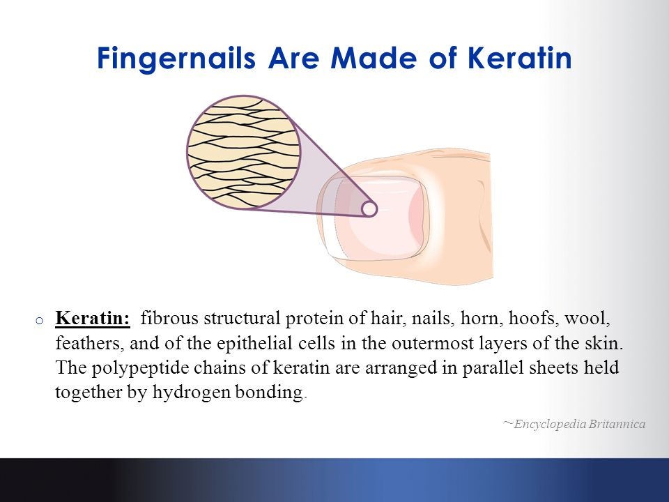 Fingernails Are Made of Keratin o Keratin: fibrous structural protein of hair, nails, horn, hoofs, wool, feathers, and of the epithelial cells in the