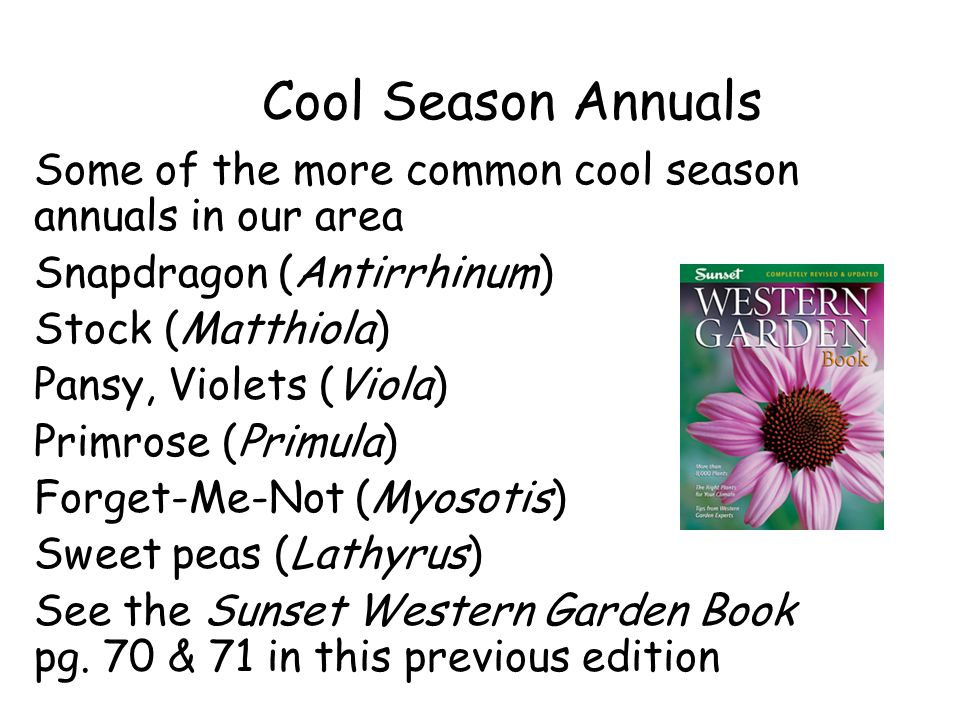 Cool Season Annuals Some of the more common cool season annuals in our area Snapdragon (Antirrhinum) Stock (Matthiola) Pansy, Violets (Viola) Primrose (Primula) Forget-Me-Not (Myosotis) Sweet peas (Lathyrus) See the Sunset Western Garden Book pg.
