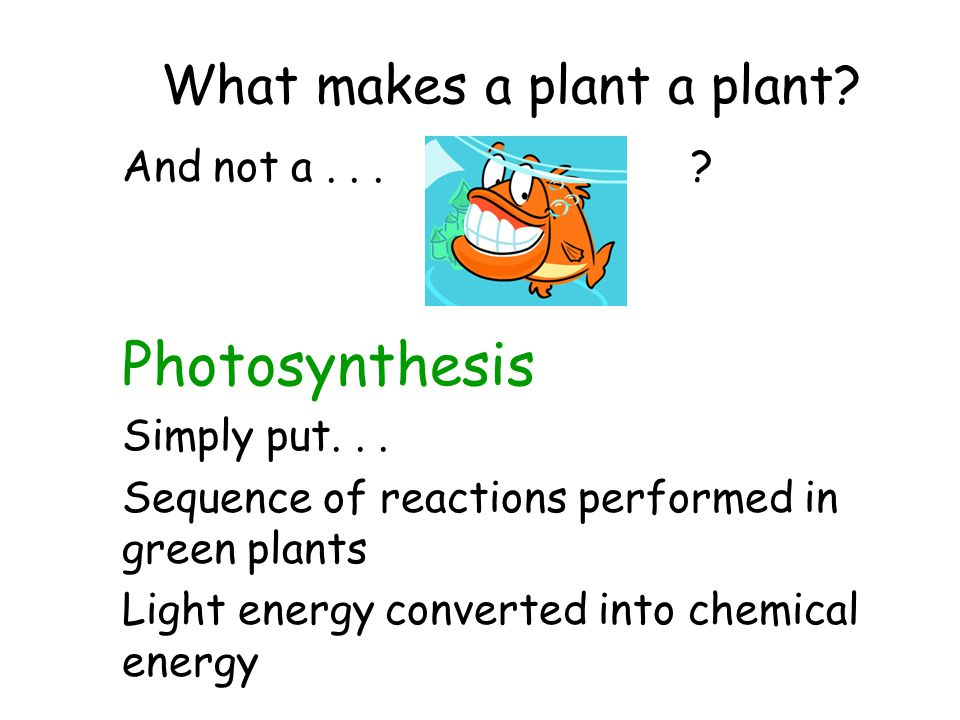 What makes a plant a plant.And not a... ?Photosynthesis Simply put...