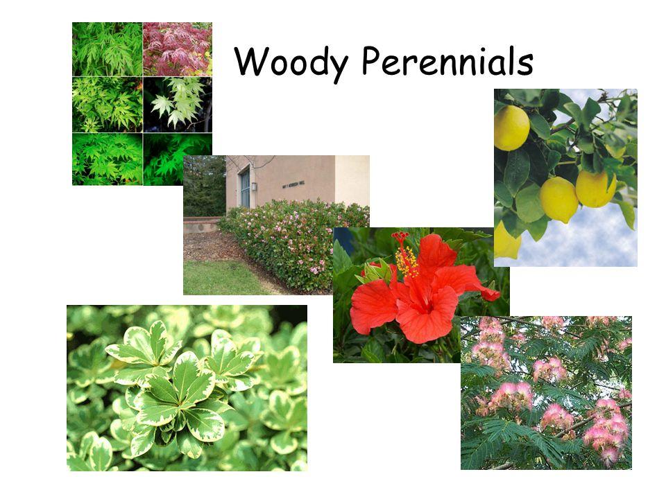 Woody Perennials