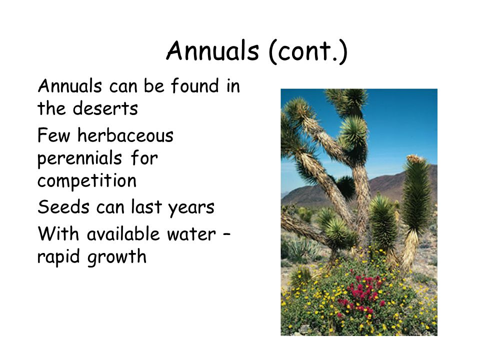 Annuals (cont.) Annuals can be found in the deserts Few herbaceous perennials for competition Seeds can last years With available water – rapid growth